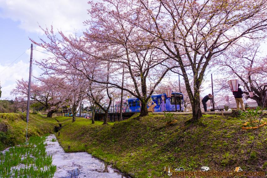 noto kashima sakura station 能登鹿島駅 桜駅 日本最大 桜