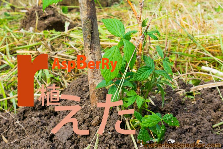 石川県 能登 ラズベリー 販売 raspberry in noto ishikawa