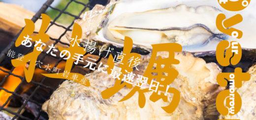 石川県 穴水町 牡蠣 直販 Oyster in Anamizu Ishikawa Noto