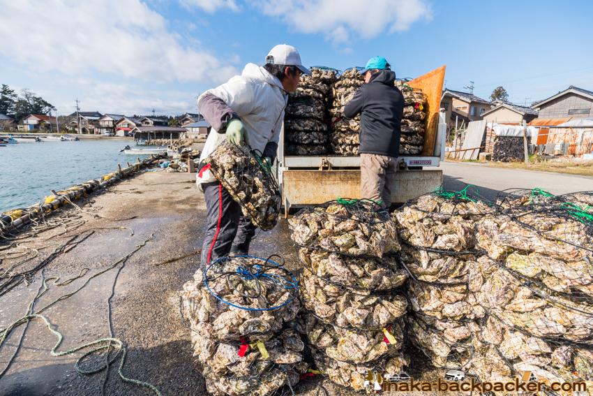能登 石川県 穴水町 牡蠣 出荷 販売 直売