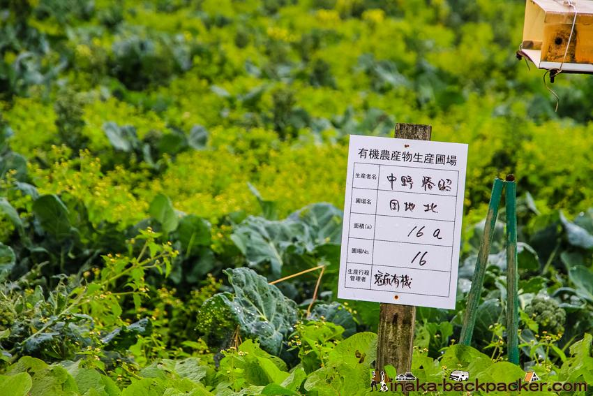 長野県 みどり湖 畑 かりている