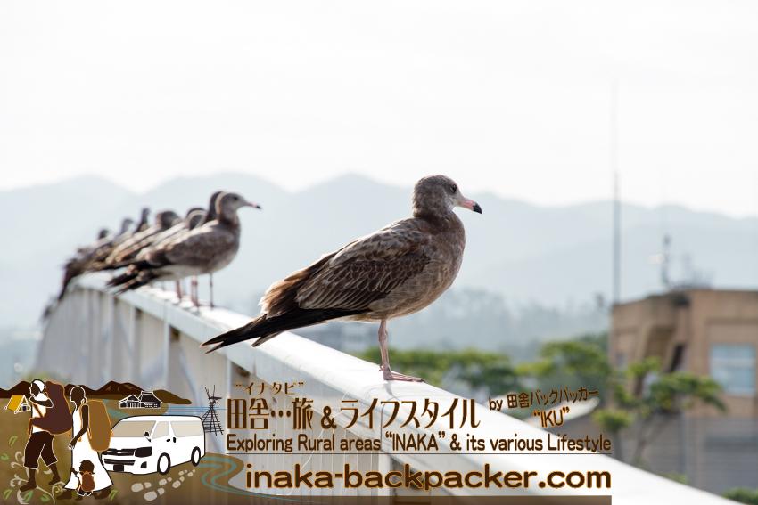 石川県輪島市 海鳥