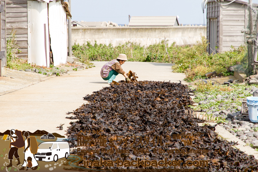 舳倉島で昆布を干すおばさん。Drying seaweed on a street on Hegura Jima island.