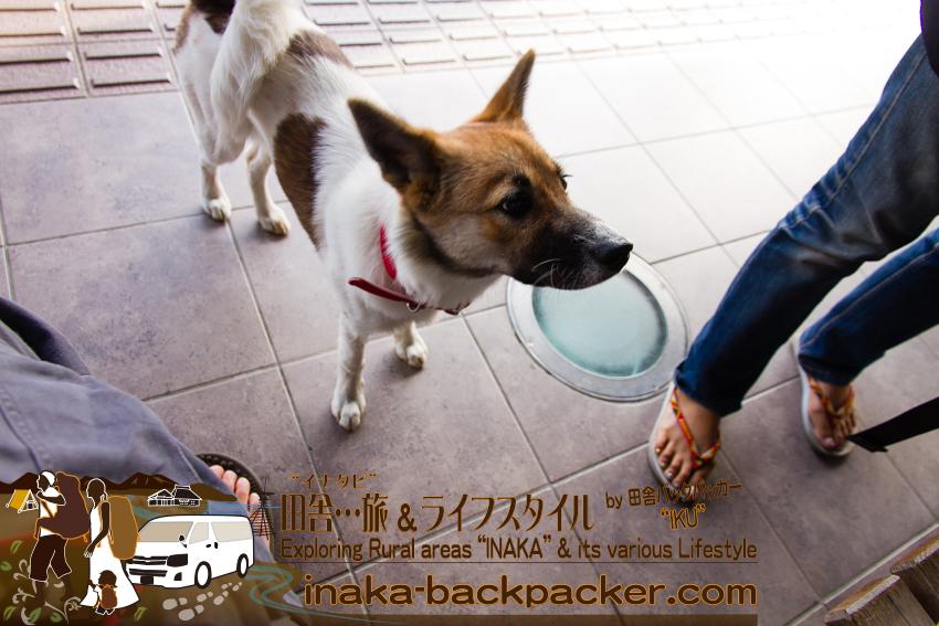 石川県輪島市 - 道の駅輪島ふらっと訪夢(のと鉄道 旧輪島駅)。よってくる可愛い犬。