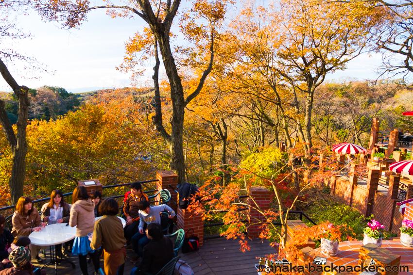 樹ガーデンの紅葉 紅葉カフェ 鎌倉 Autumn Cafe in Kamakura Japan