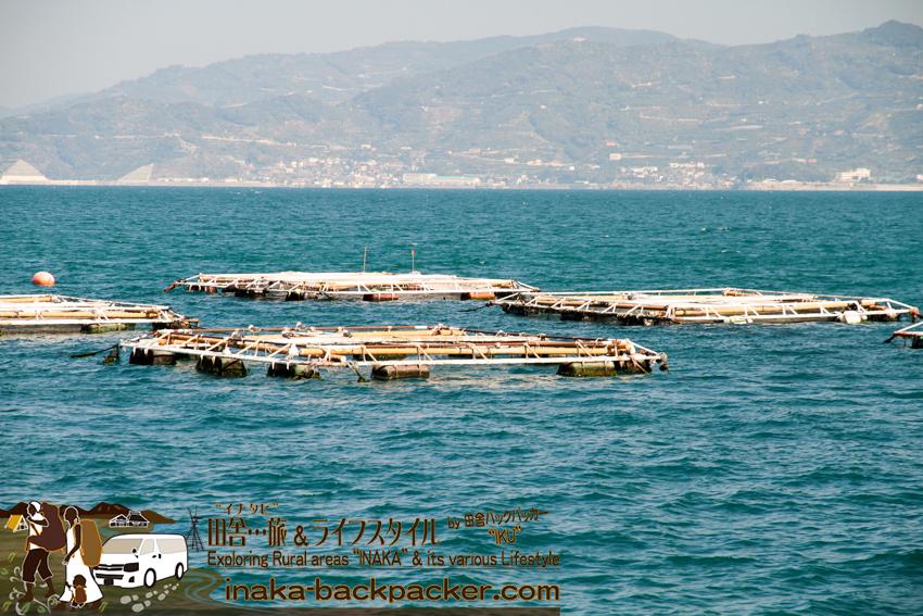 日振島では鯛(タイ)、縞鰺(シマアジ)、カンパチ、マグロなどを養殖