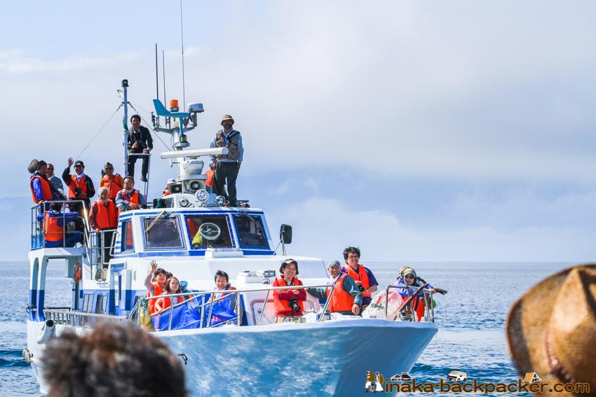 wild life sperm whale shiretoko hokkaido japan マッコウクジラ 知床半島 北海道 日本