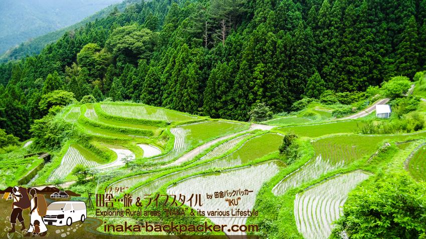 徳島県 上勝町 樫原の棚田 6月 kamikatsu tokushima rice terrace japan