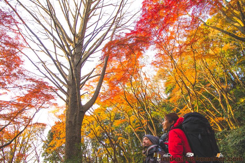 鎌倉 紅葉 獅子舞 一番きれい 穴場