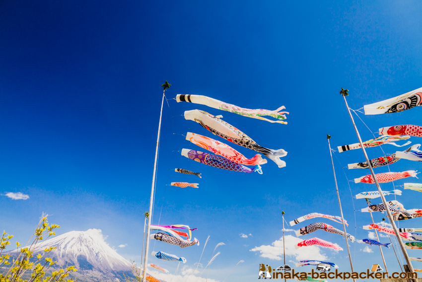 鯉のぼり 富士山 Fish on Mt Fuji