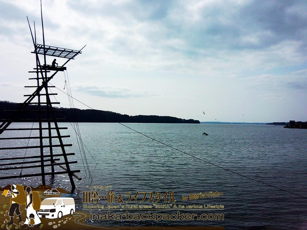 能登・穴水町中居(石川県) - 中居湾ふれあいパークに出没したイルカ