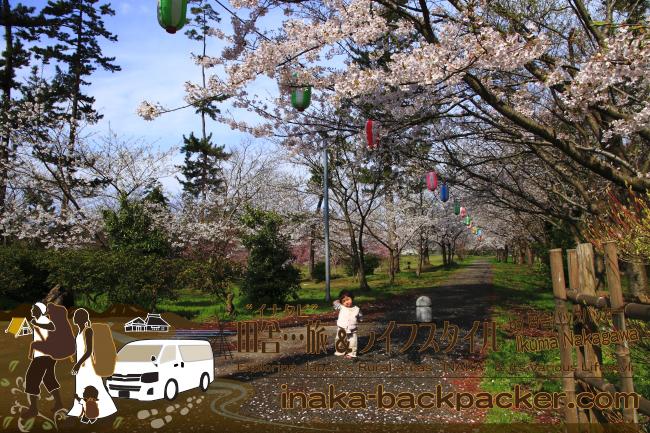輪島一本松公園の桜。もう葉桜に変わりつつあった