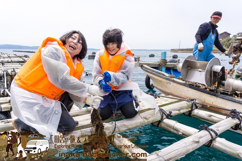 牡蠣の養殖 水揚げ体験