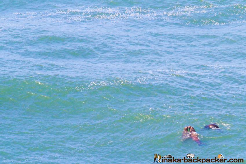 オレゴン シーライオン Oregon Sea Lion