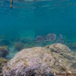 穴水町 岩車 ダイビング シュノーケル Noto Ishikawa diving snorkeling