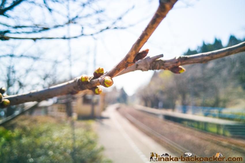 のと鉄道 能登鹿島駅 能登さくら駅 Noto Cherry Blossoms Kashima Station