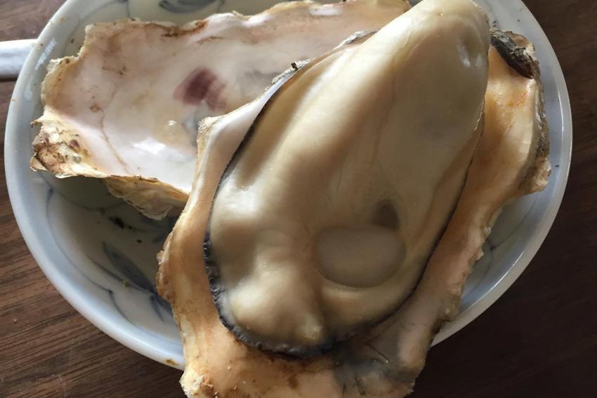能登 穴水町 岩車 牡蠣 かき