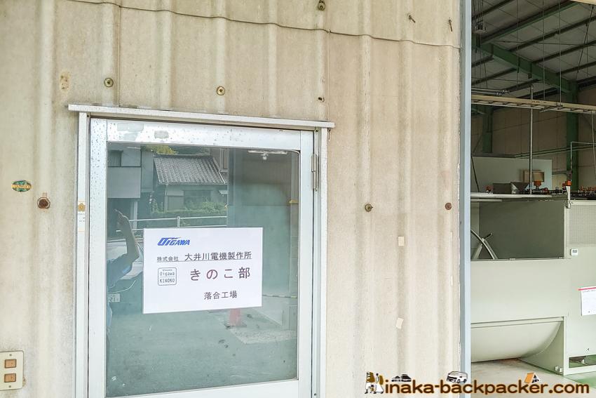 はなびらたけ 大井川電機製作所 きのこ部