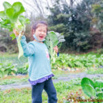 能登 石川県 穴水町 畑 田舎暮らし 安心安全 農作物
