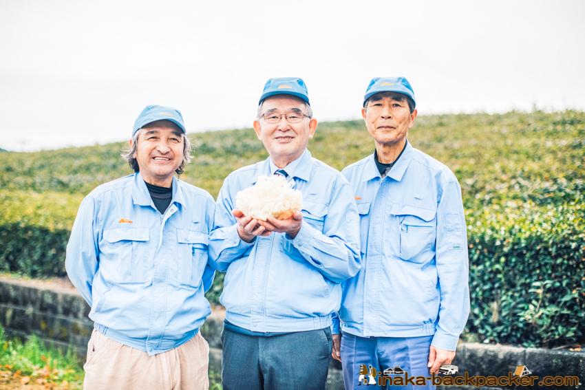 大井川電機製作所 はなびらたけ ホホホタケ 電球